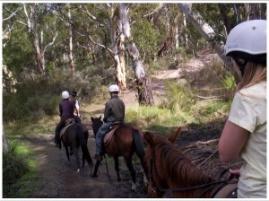 Thredbo Valley Horseriding 1